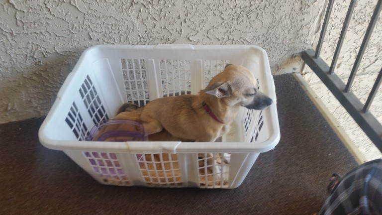 On Their Way Out, Couple Sees Dog In Need And Grabs A Laundry Basket