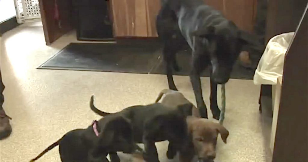 Mama Dog Back With Puppies Who Were Thrown Off Of A Bridge