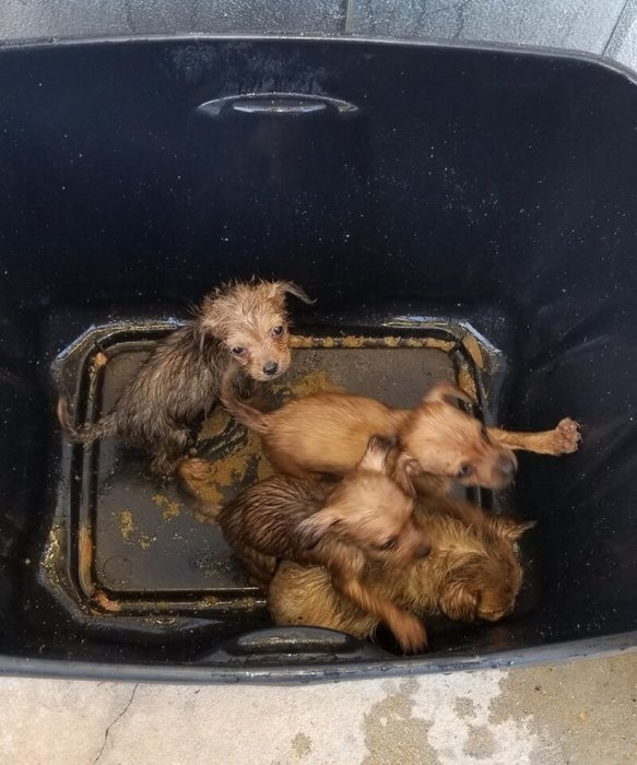 Heartless creep left puppies in sealed container in front of animal shelter