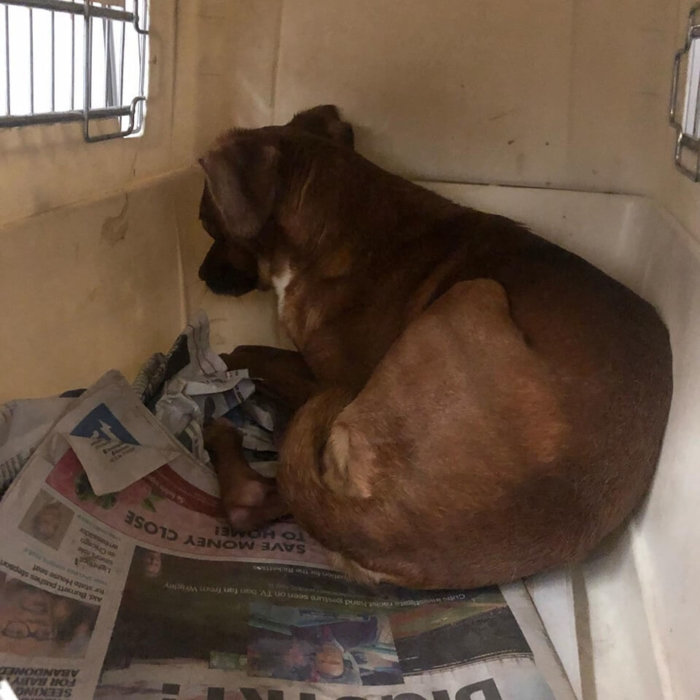 Terrified puppy surrendered in crate with 'CAUTION' on card