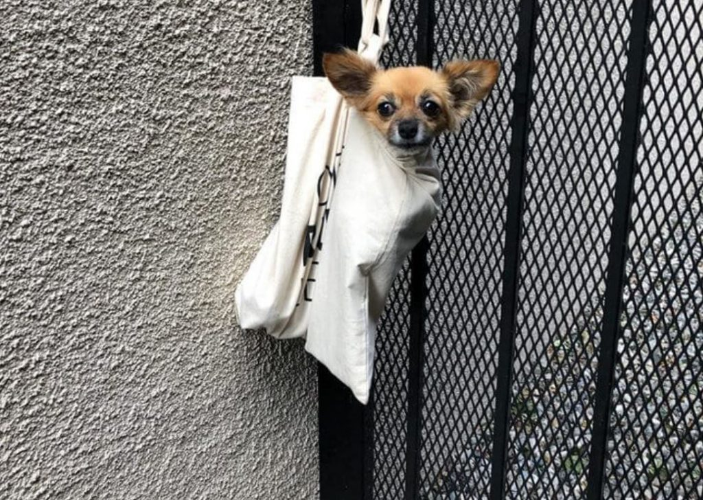 Dog stuffed in bag with legs tied left hanging off door knob