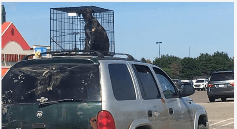 Following social media outrage, man explains why dog is in cage on his vehicle