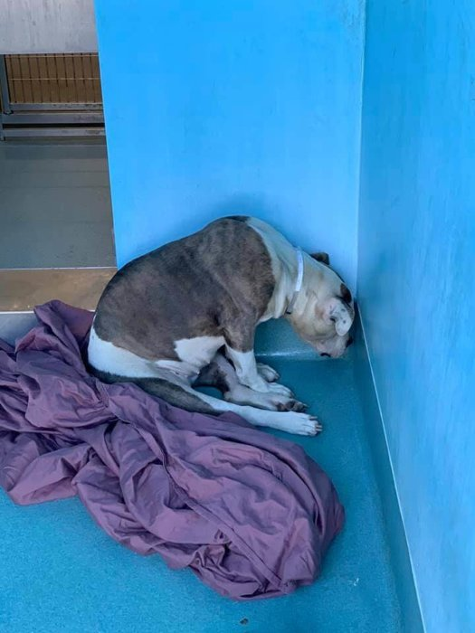 Terrified pup dumped by her owner found a corner to hide