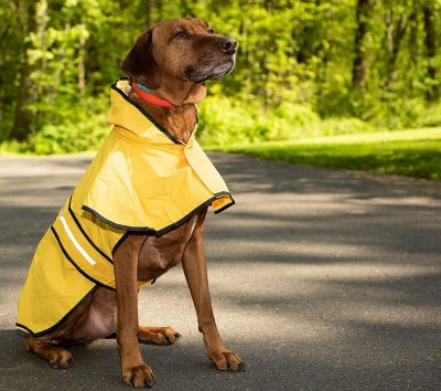 Fashion Pet Rainy Day Slicker