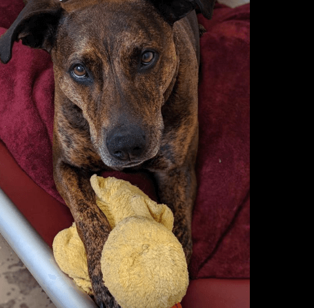 Desperate for a loving home – dog has been at shelter for four long years