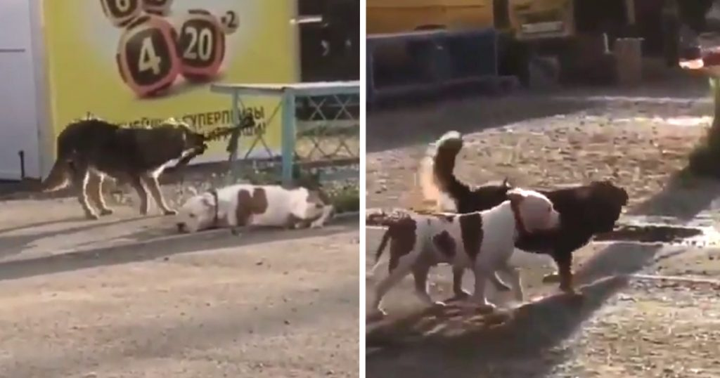 Stray Dog Comes Along And Untethers Puppy Tied Up Outside