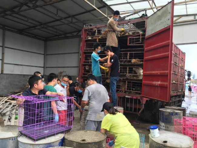 Locals See Truck Full Of Dogs Heading To A Meat Farm And Follow To Intervene