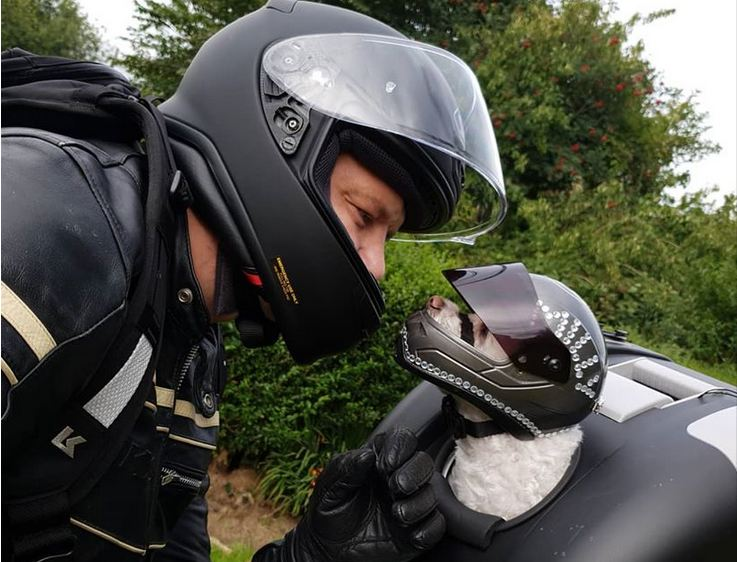 Motorcyclist Keeps His Dog Safe For The Ride