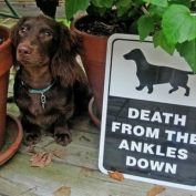 """15 """"Beware Of Dog"""" Signs Are Too Clever To Be Scary"""
