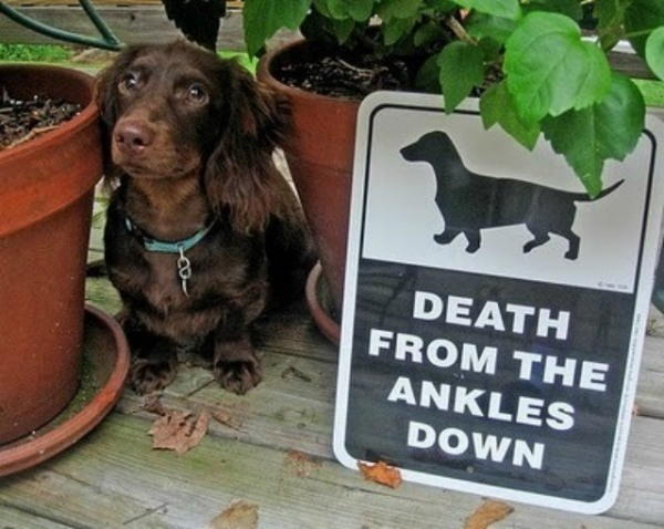 "15 ""Beware Of Dog"" Signs Are Too Clever To Be Scary"
