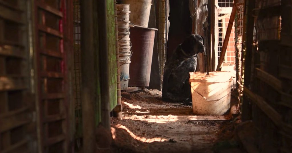 55 Dogs Are Pulled From The Darkness Of A Hidden Dog Meat Farm