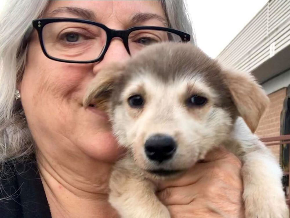 Flying From Winnipeg To Ottawa? Add A Rescue Dog To Your Boarding Pass And Play With It For Free