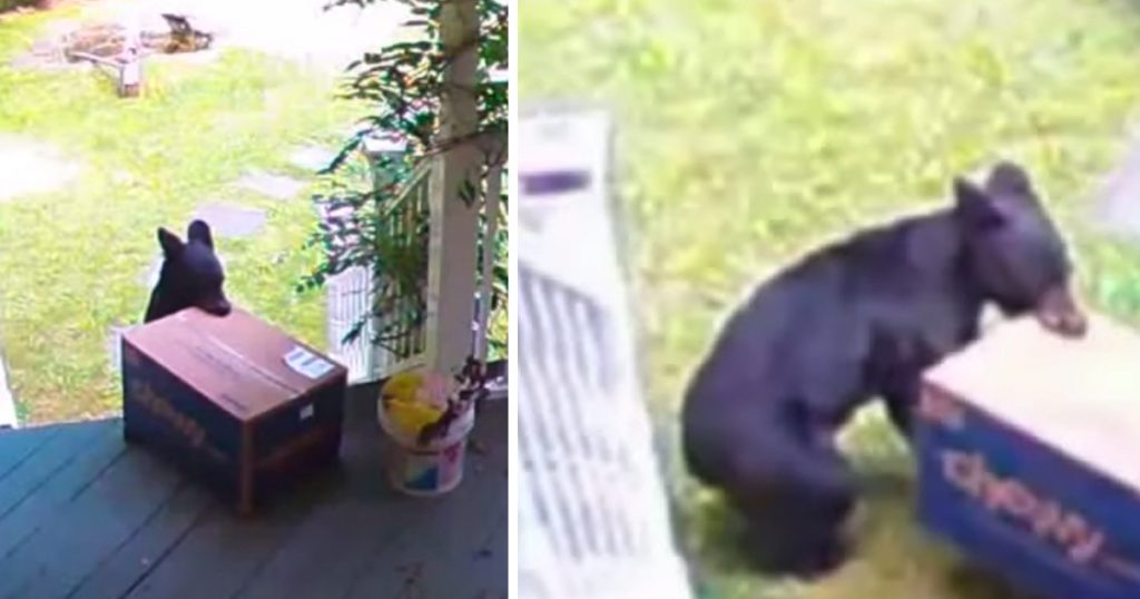 Bear Comes Out Of The Woods To Swipe Food Delivery For Family's Dogs