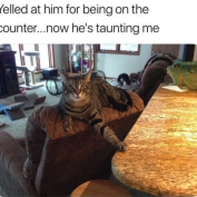 13 Pics That Show Cats Are The Real Bosses Of The House
