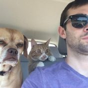 25 Dogs Who Just Realized They Are Going To The Vet