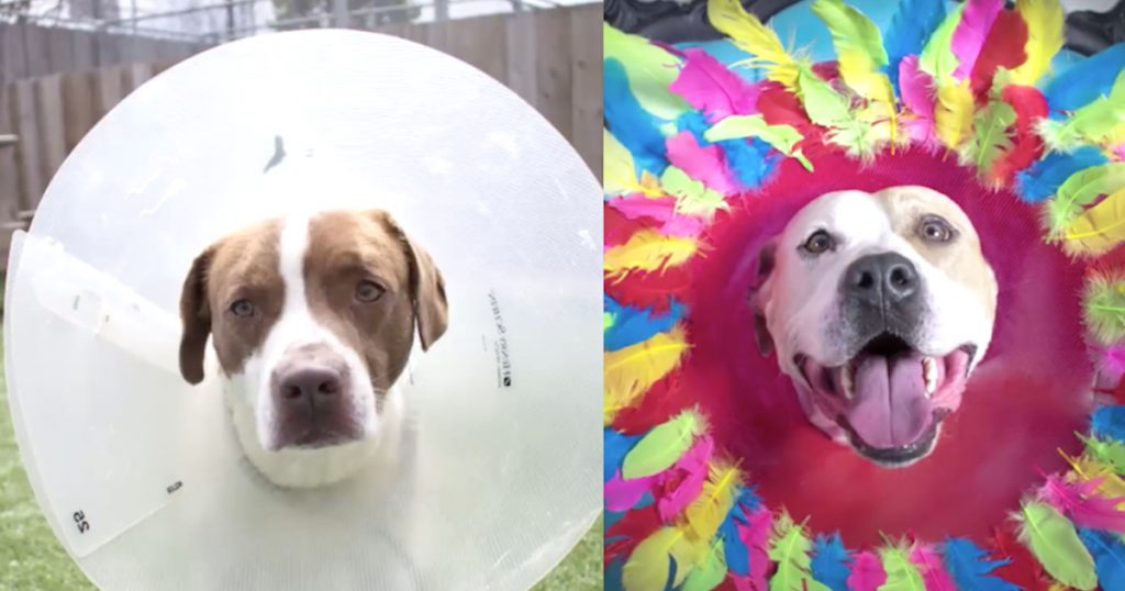 Artist Gets Idea To Decorate Cones To Help Shelter Dogs Get Adopted