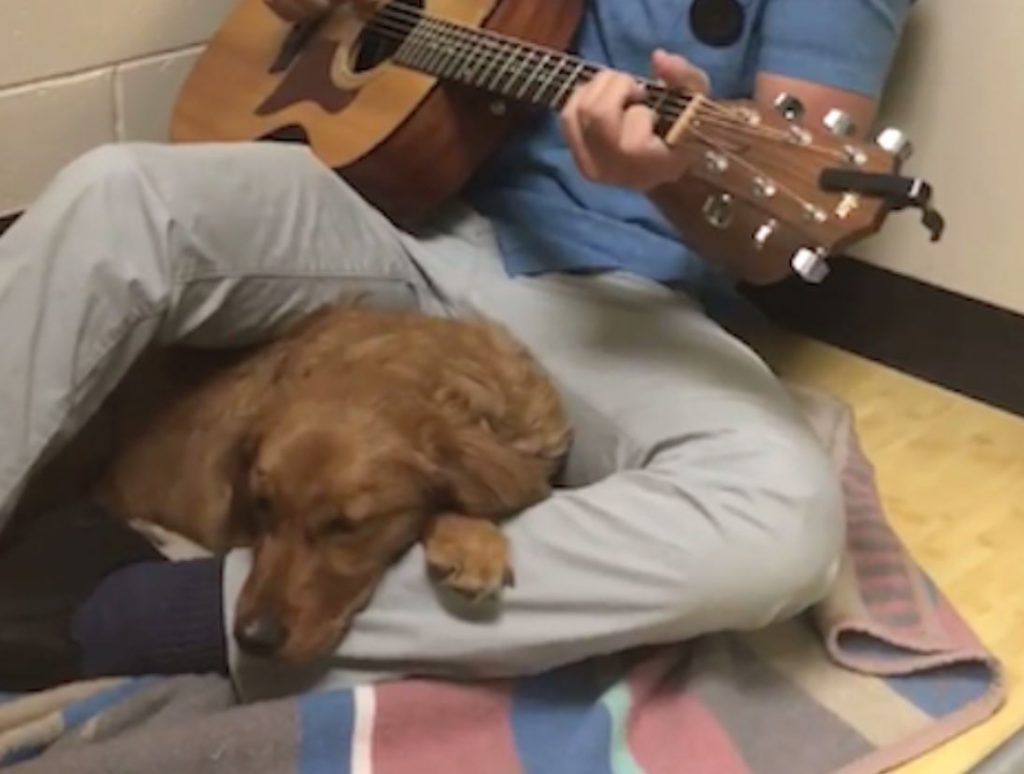 Anxious Dog Is Serenaded And Calmed By Guitar-Playing Vet Before Her Surgery