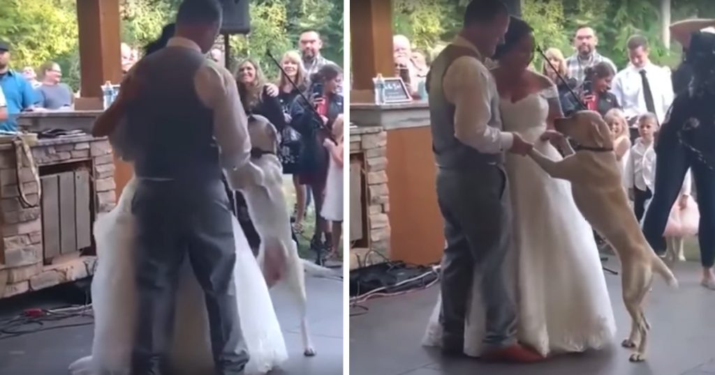 Dog Joins In On Mom And Dad's First Dance On Their Wedding Day