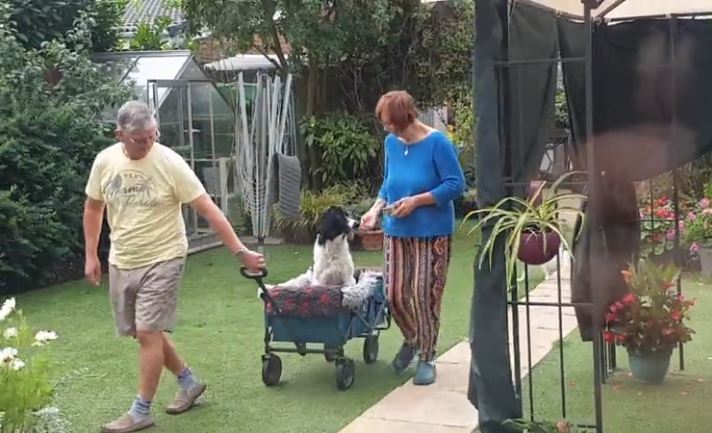 Parents caught teaching old dog to ride in trolley