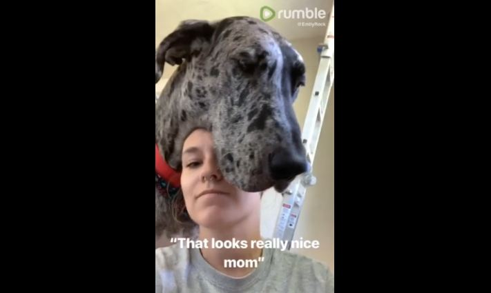 "Massive Great Dane dog ""helps"" woman paint her new home"