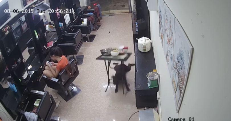 Mischievous Dog Makes a Mess