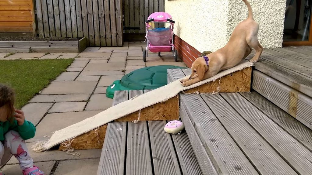Cute Puppy Hilariously Tries Out His New Ramp