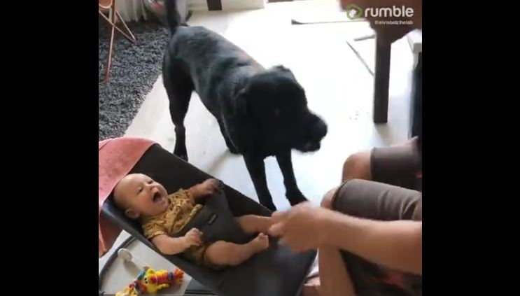 Protective dog defends baby from tickles