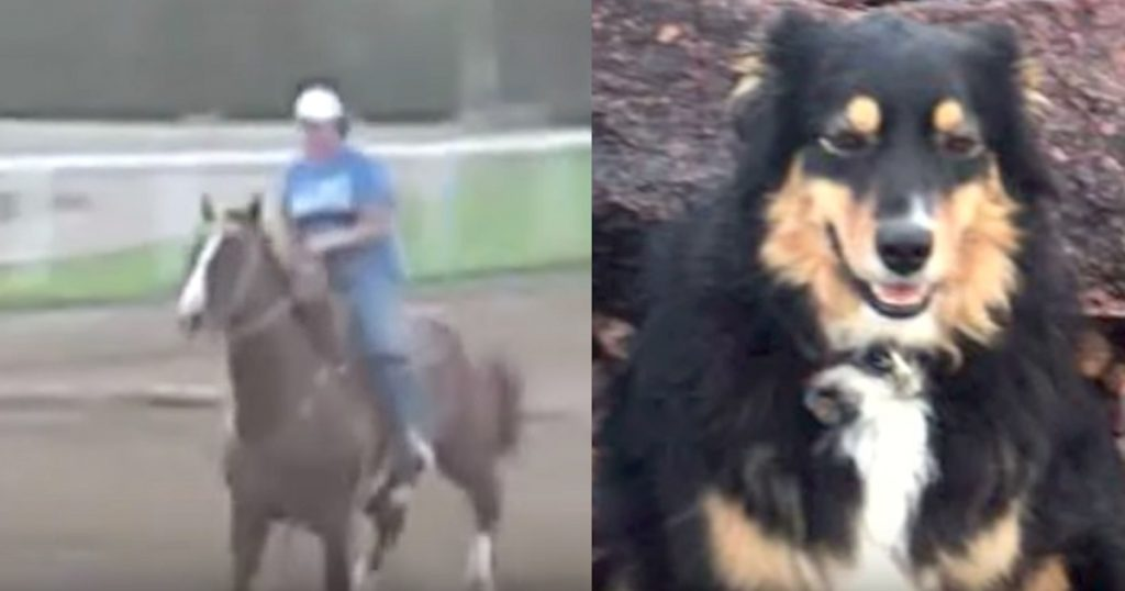 Woman Dragged Half A Mile After Falling Off Of Horse, And Her Dog Saves Her Life
