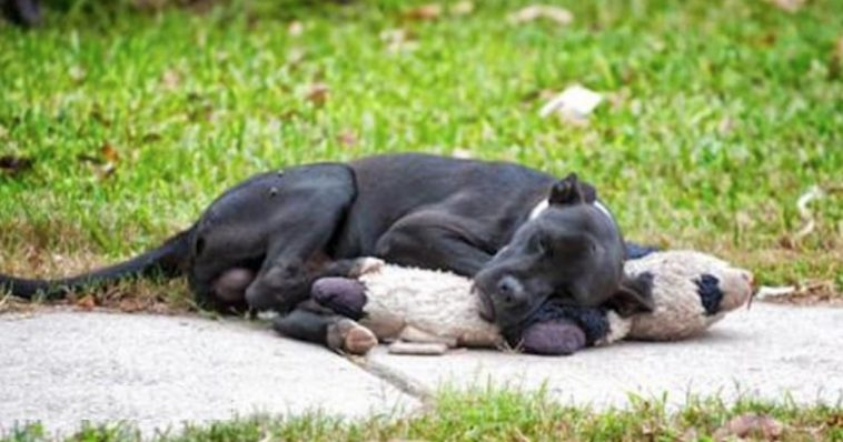 Stray Dog Snuggling With Toy Shines A Light On The Big Problem In Houston