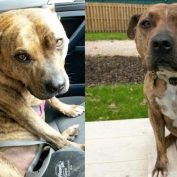 Shelter Dog Who'd Been Rejected 18,000 Times Lands Hollywood Movie Role