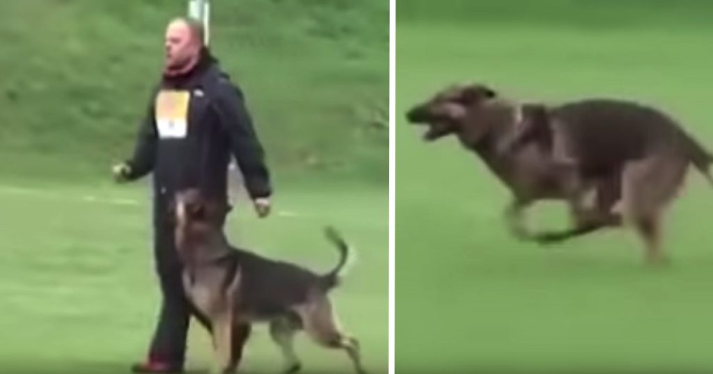 German Shepherd Hits The Brakes On Command And Stops On A Dime