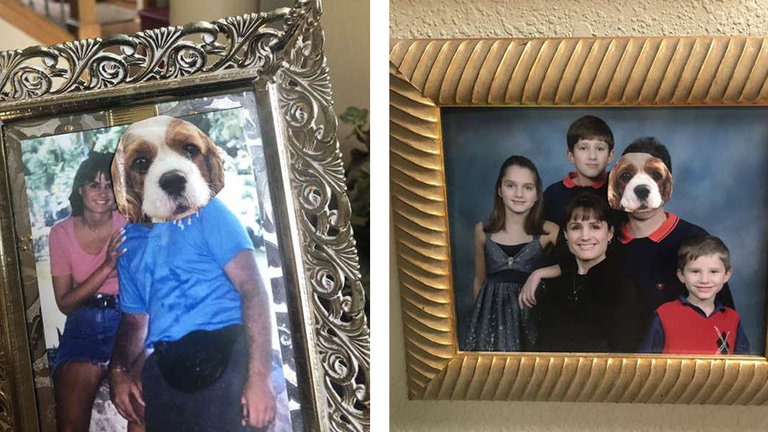 Woman Replaces Her Husband's Face In All The Family Photos After He Refuses To Adopt A Dog