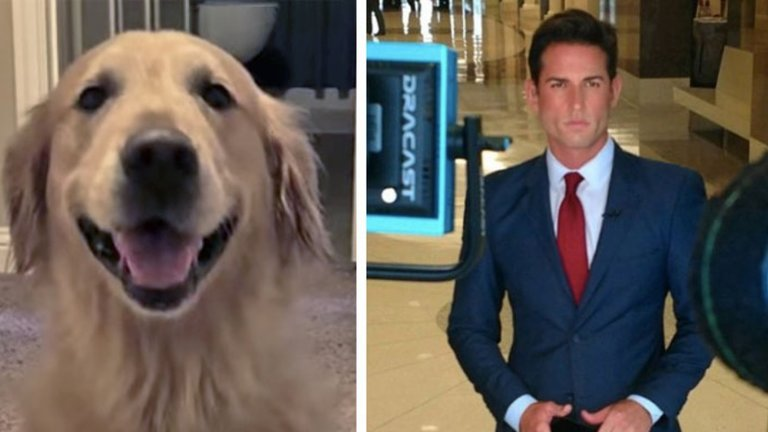 TV Reporter Saves The Day After Family's Dog Is Stolen On Trip.