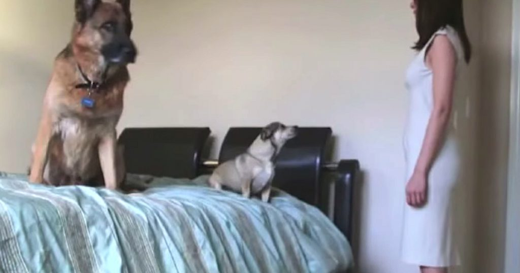 Pregnancy Time Lapse Video Also Shows Dogs Growing Alongside Mom's Belly