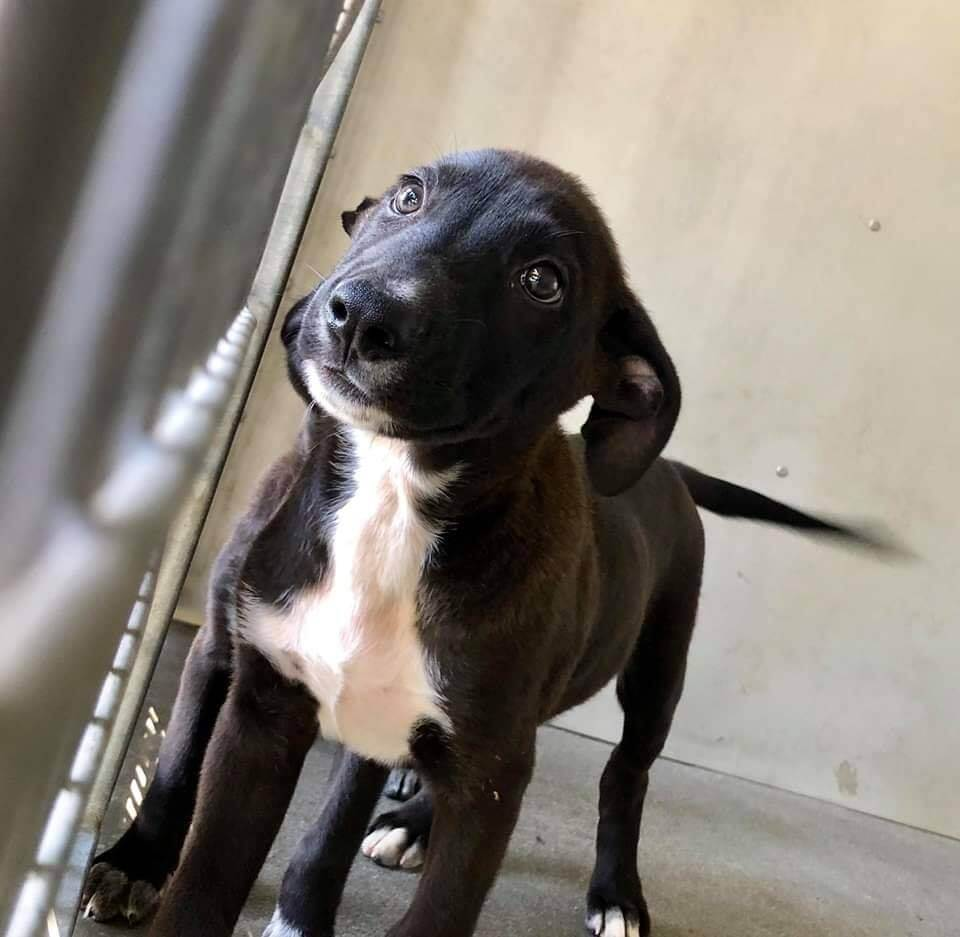 Surrendered puppy all alone after all of his littermates were adopted
