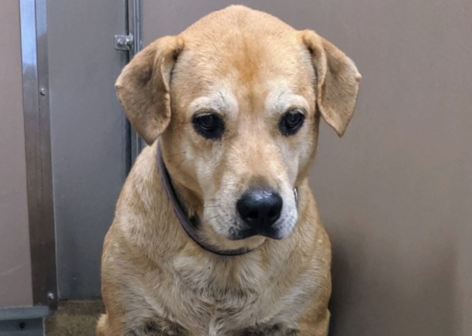 Homeless dog is so depressed at shelter that she won't look at anyone