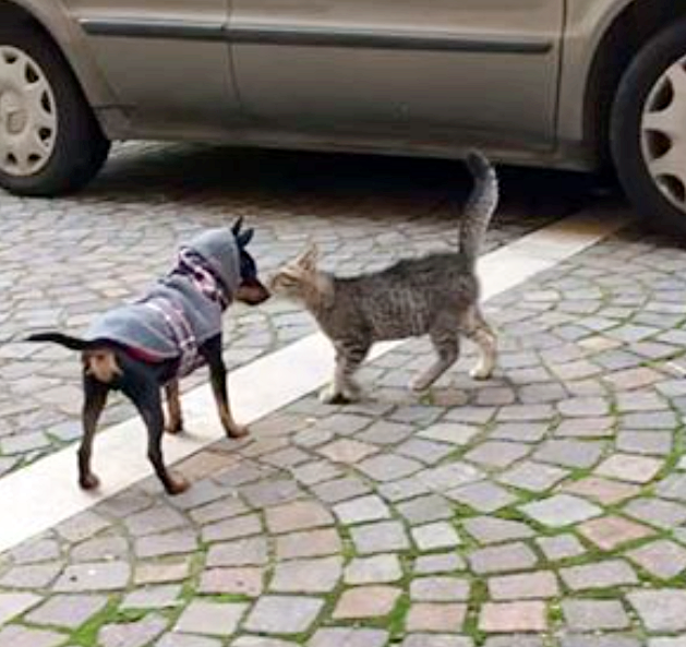 Puppy Takes To Stray Kitten, Adopts Him As His Own