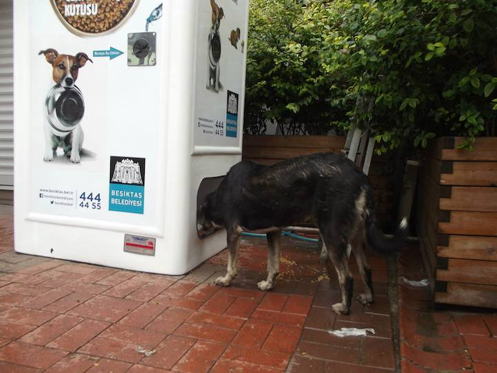Recycling Boxes In Turkey Provide Food For Stray Animals When A Bottle Is Deposited