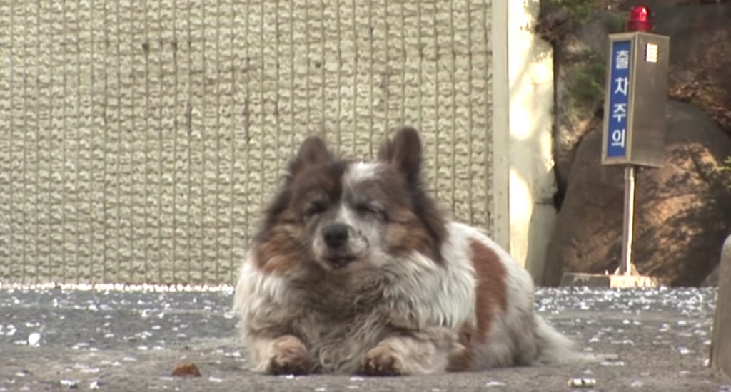 Abandoned Blind Dog Waits In Place For Her Owners To Return