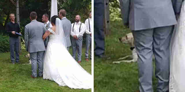 Dog Joins Her Parents During Their First Dance At The Wedding