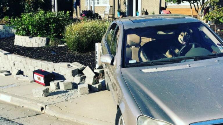 Dog had a 'ruff' ride crashing family's Mercedes Benz