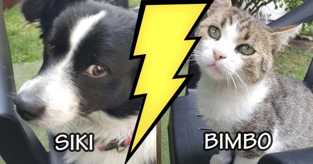Cat VS. Dog (The Battle For Food)