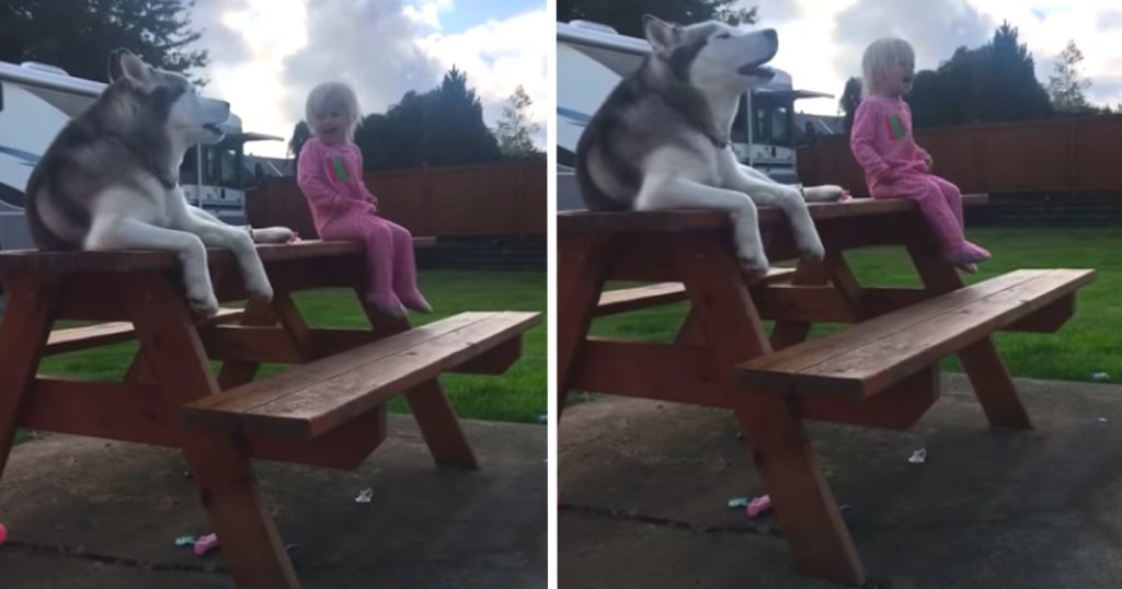 Dog And Little Girl Have Conversation In Their Own Language