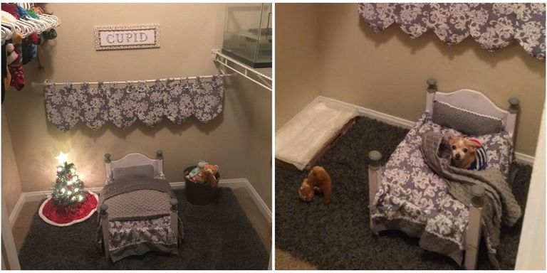 Student Turns Her Closet Into An Adorable Bedroom For Her Senior Dog