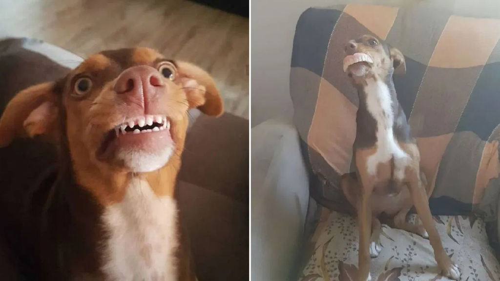 Grandma Searches All Over For Dentures, Smiling Dog Had Them All Along