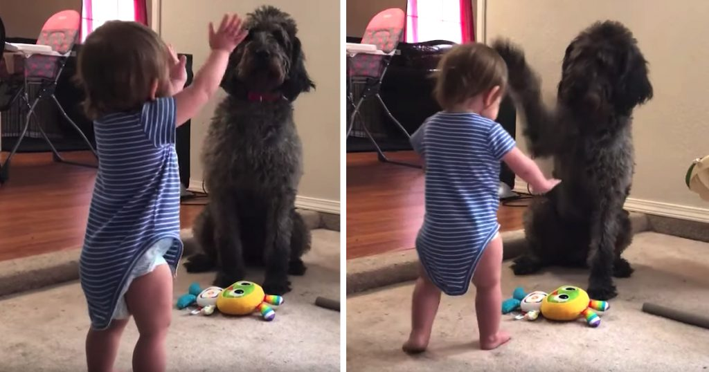Good Dog Teaches Her Human Toddler To Sit