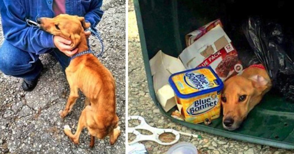 Woman Throws Her Dog In The Trash So She Can Move In With Her Boyfriend