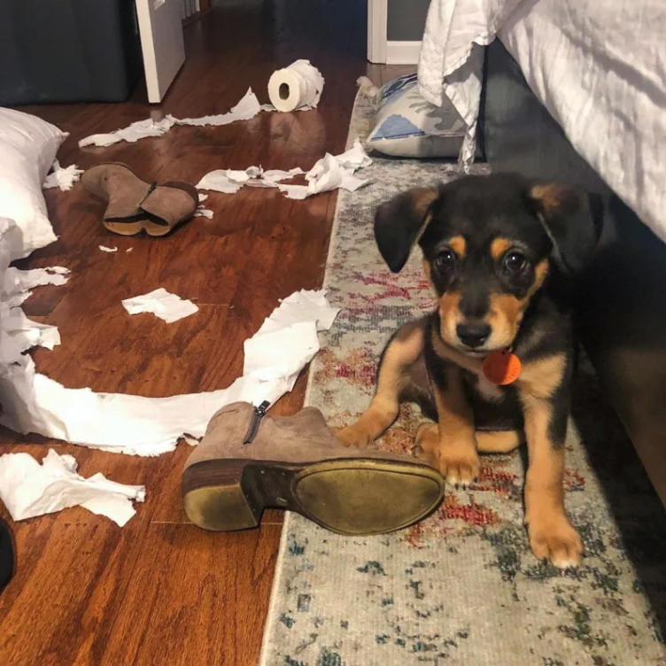 16 Guilty-Looking Dogs Who Didn't Make The Mess