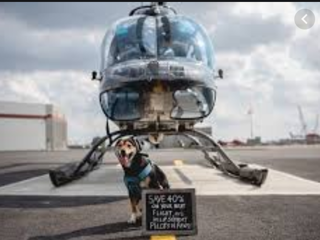NYC helicopter company offers dog rides with no doors as not to hinder views