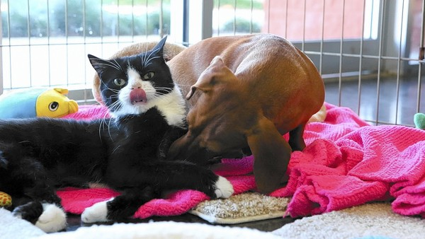 Devoted Dachshund Refuses to Leave Paralyzed Cat's Side After Both Abandoned
